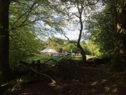 Selene Big Top woodland